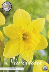 """Narcissus Trumpet """"Carlton"""", 5 st./förpack."""