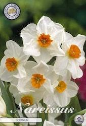 """Narcissus Trumpet """"Geranium"""", 5 st./förpack."""