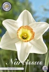 """Narcissus Trumpet """"High Society"""", 5 st./förpack."""