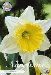 "Narcissus Trumpet ""Ice Follies"", 5 st./förpack."