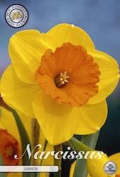 """Narcissus Trumpet """"Juanita"""", 5 st./förpack."""