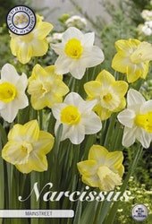 """Narcissus Trumpet """"Mainstreet"""", 5 st./förpack."""