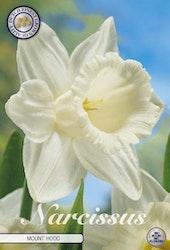 """Narcissus Trumpet """"Mount Hood"""", 5 st./förpack."""
