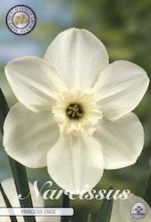"Narcissus Trumpet ""Princess Zaide"", 5 st./förpack."