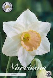 """Narcissus Trumpet """"Salome"""", 5 st./förpack."""