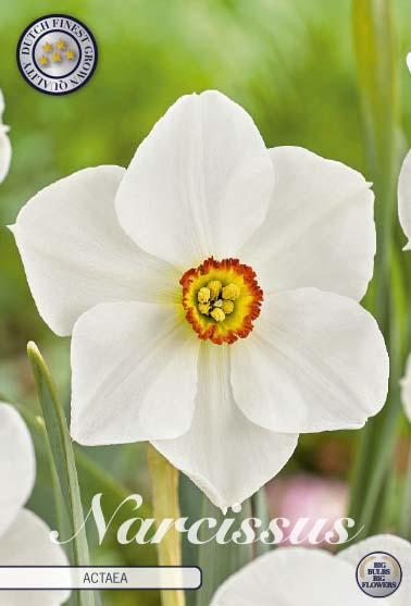 "Narcissus ""Actaea"", 5 st./förpack."