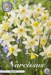 """Narcissus """"Sailboat"""", 10 st./förpack."""