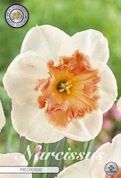 "Narcissus ""Precocious"", 5 st./förpack."