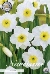 """Narcissus """"Segovia"""", 10 st./förpack."""