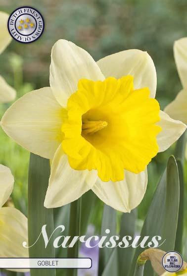 """Narcissus Trumpet """"Goblet"""", 5 st./förpack."""