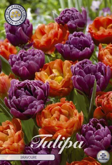 """Tulipan """"Bravoure"""", 10 st./förpack."""