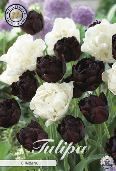 "Tulipan ""Charming"", 10 st./förpack."