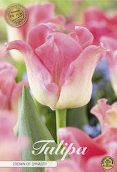 "Tulipan ""Crown of Dynasty"", 7 st./förpack."