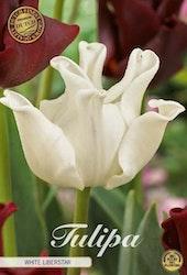 """Tulipan """"White Liberstar"""", 7 st./förpack."""