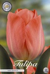 "Tulipan Darwin ""Hans Brinker"", 10 st./förpack."