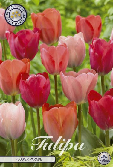 """Tulpan """"Flower Parade"""", 10 st./förpack."""