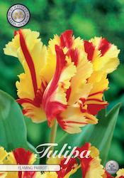 "Tulpan ""Flaming Parrot"", 7 st./förpack."