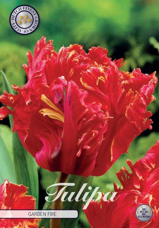 "Tulpan ""Garden Fire"", 7 st./förpack."