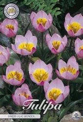 """Tulpan """"Lilac Wonder"""", 10 st./förpack."""