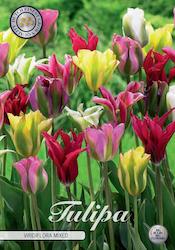 """Tulpan """"Viridiflora Mixed"""", 10 st./förpack."""