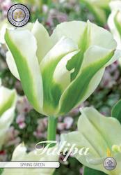 """Tulpan """"Spring green"""", 7 st./förpack."""