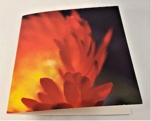 Fyrkantigt grattiskort med röd blomma, utan text