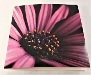 Fyrkantigt grattiskort med lila blomma, utan text