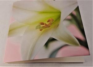 Fyrkantigt grattiskort med vit blomma, utan text
