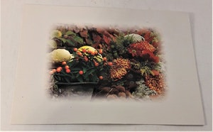 Kort/vykort med blom- och grönsaksmotiv