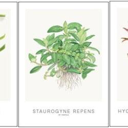 Kort (inkl. Cyperus)