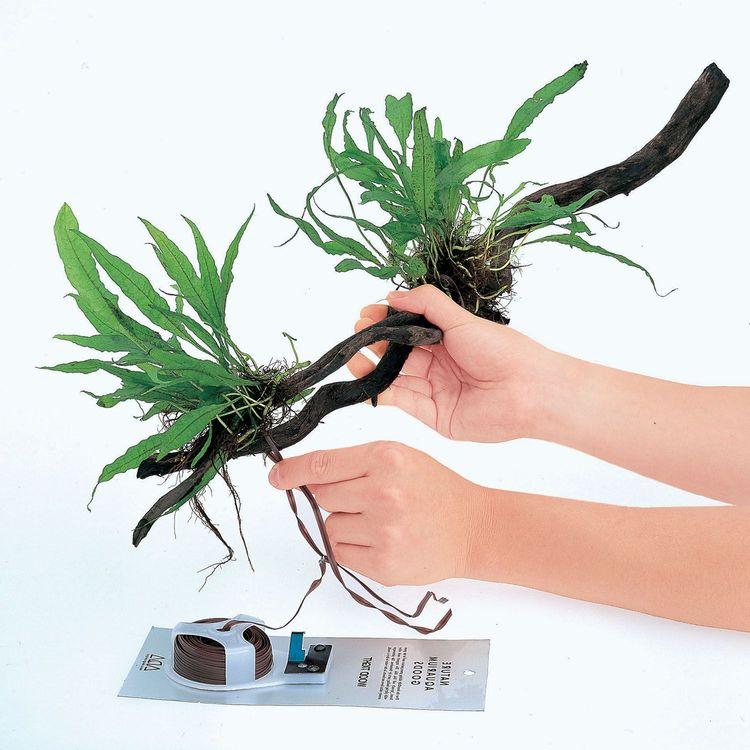 Wood Tight - Tråd för bindning av växter till rötter