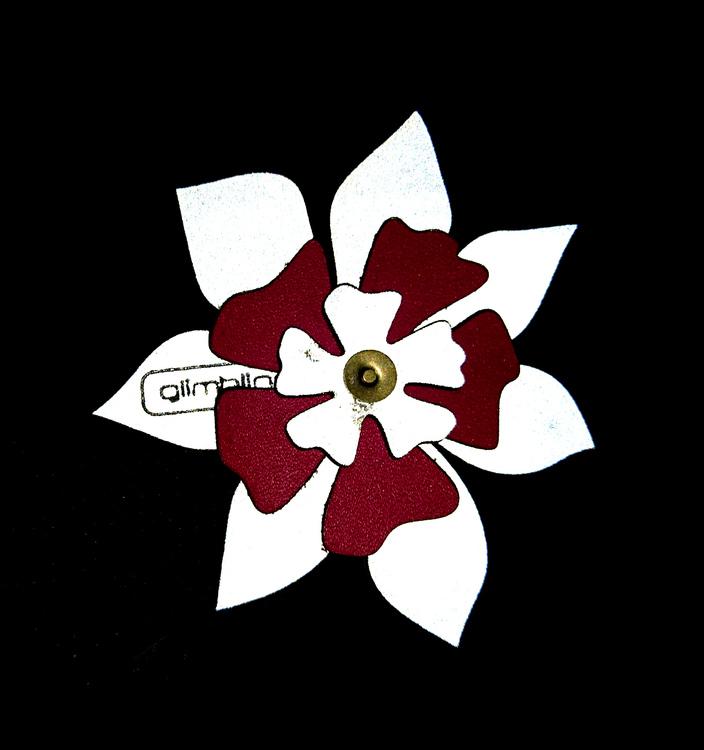 Clematis blomreflex, cerise