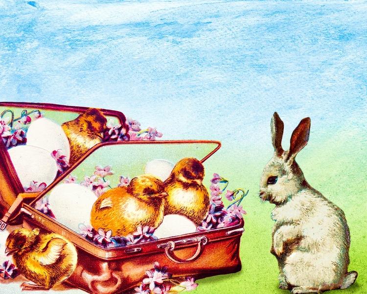 Hare och kycklingar