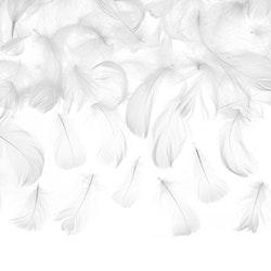 Fjädrar, vita