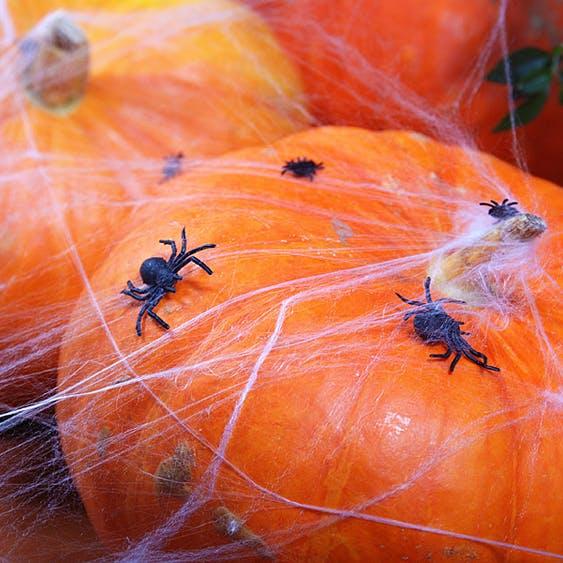 Spindlar, svarta, 10-pack