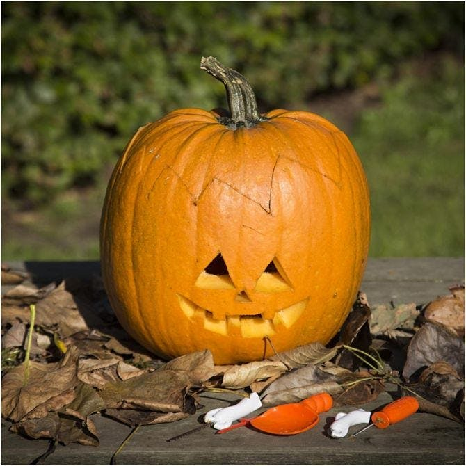 Halloweenpumpa, Skärset