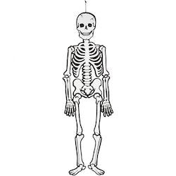 Pappfigur, Skelett