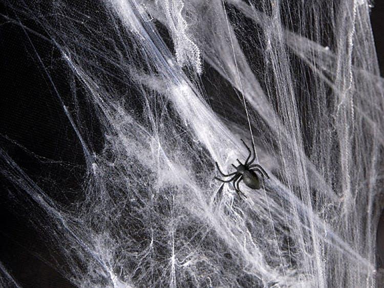 Vit spindelväv Halloween