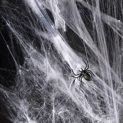 Spindelnät, Halloween, Vit