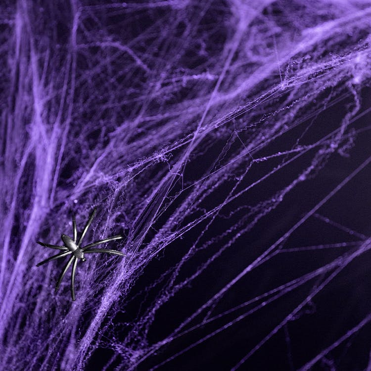 Lila spindelnät Halloween