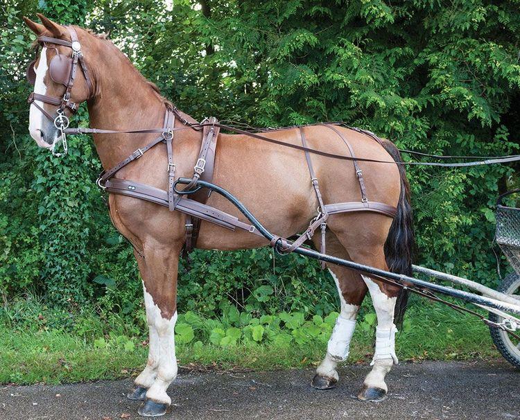 Zilco Brun Single Harness
