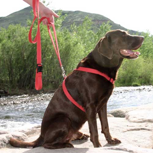 Good Dog Company / Hemp Basic / Red / Harness