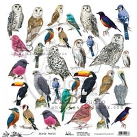 A.B Studio Klippark - Birds World