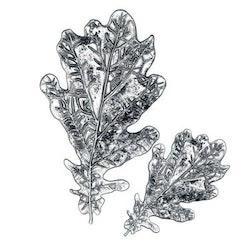 Sizzix Tim Holtz 3 D Impresslits Embossing folder - Oak leaf