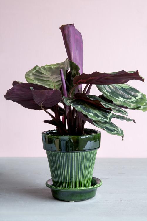 Bergs Potter - Green Glazed - Simona