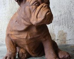 Hundstaty - Rostfärgad (Bulle)