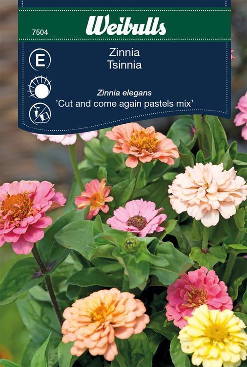 Zinnia - Blandning - Weibulls