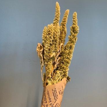 Torkat Amaranthus - Naturgrön