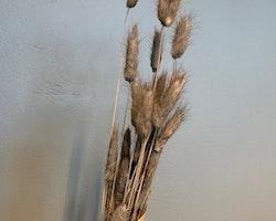 Torkad Bunny tail/Lagurus - Grå