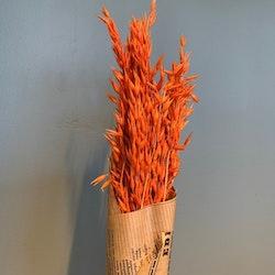 Torkat havre - Orange